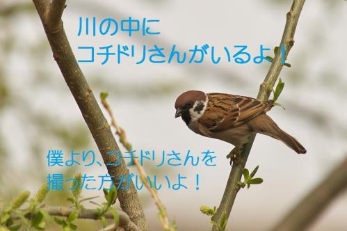 040_20120426195236.jpg