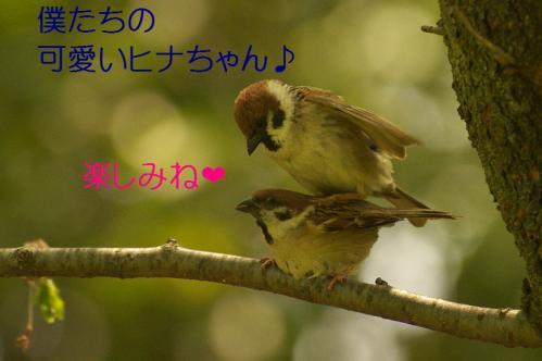 040_20120430195425.jpg