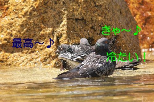 040_20120501203817.jpg