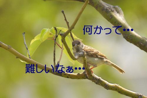040_20120531224807.jpg