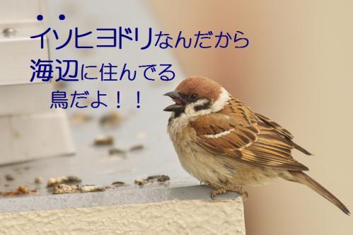 040_20120611231603.jpg