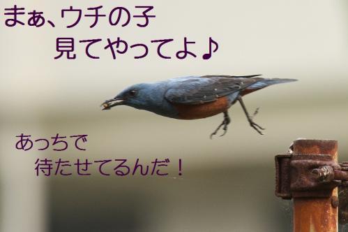 040_20120612214927.jpg