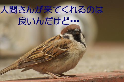 040_20120630222337.jpg