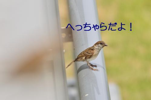 040_20120711222458.jpg