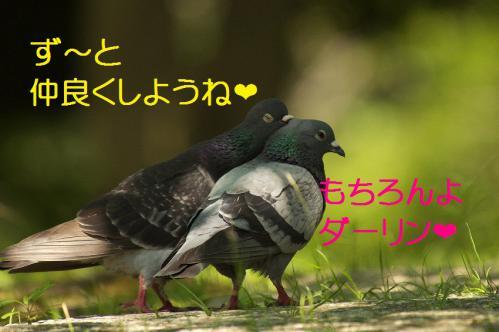 040_20120731204344.jpg
