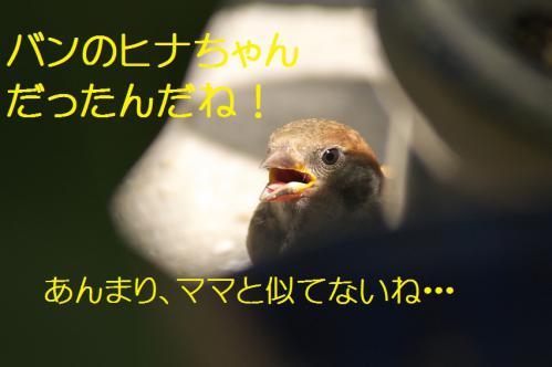 040_20120821210914.jpg