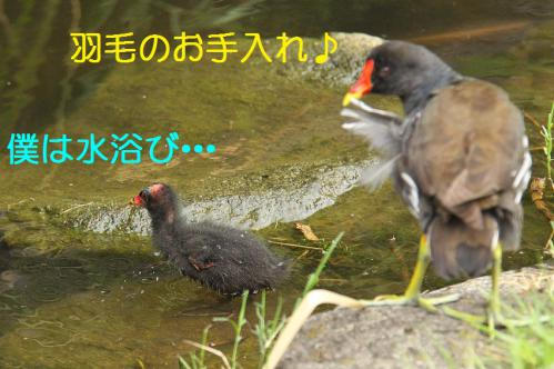 040_20120822221731.jpg