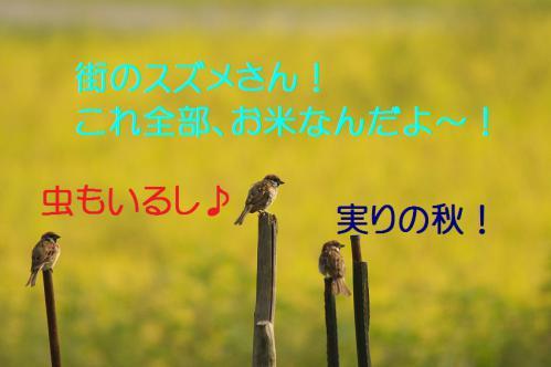 040_20120904224403.jpg