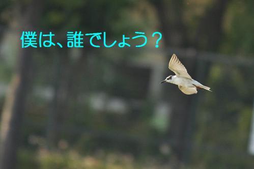 040_20121009191350.jpg