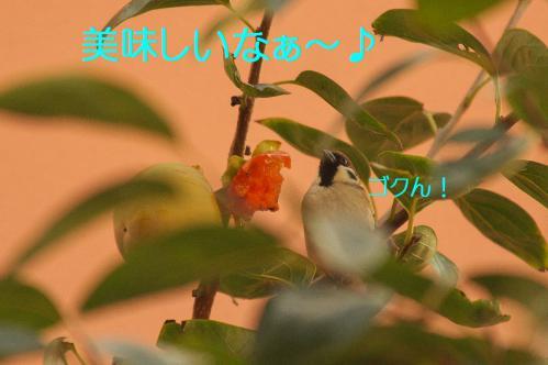 040_20121030223100.jpg