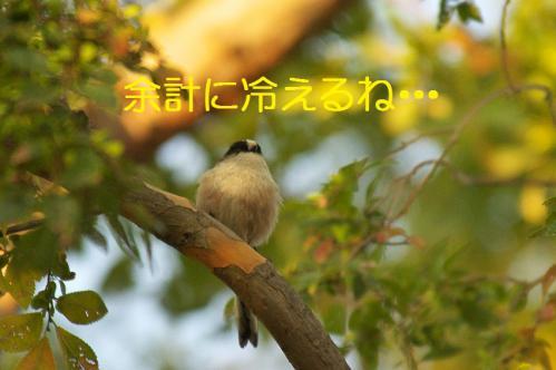 040_20121031214755.jpg