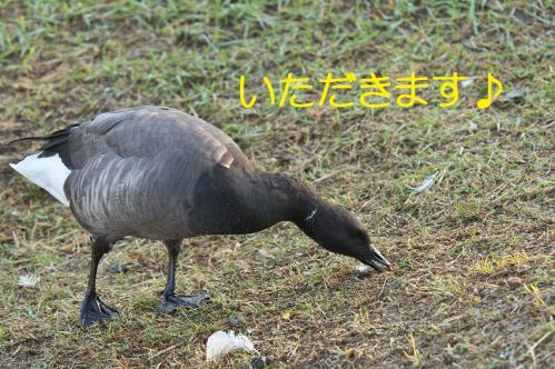 040_20121102220017.jpg