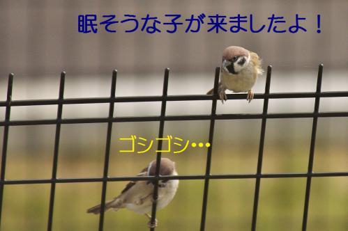 040_20121103224649.jpg
