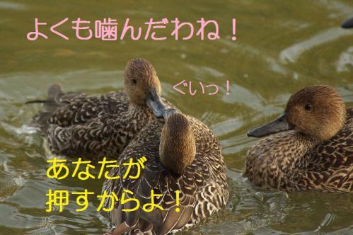 040_20121112215140.jpg