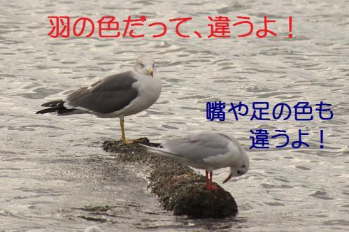 040_20121124215259.jpg