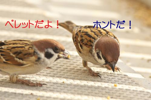 040_20121125192040.jpg
