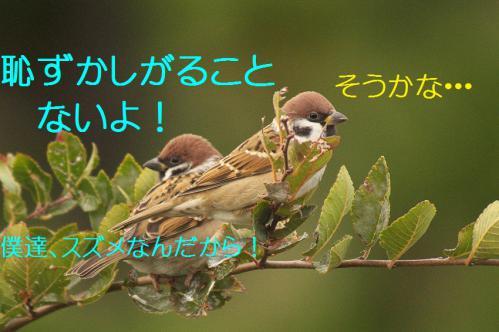 040_20121126222958.jpg