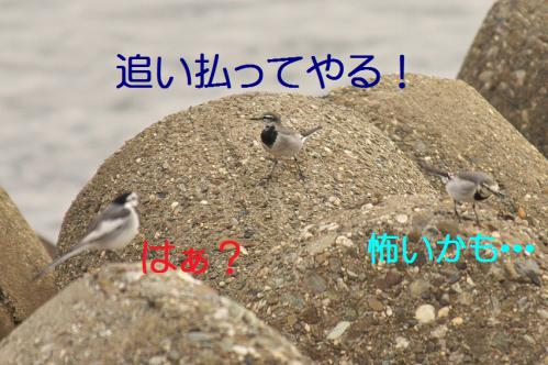 040_20121205220916.jpg