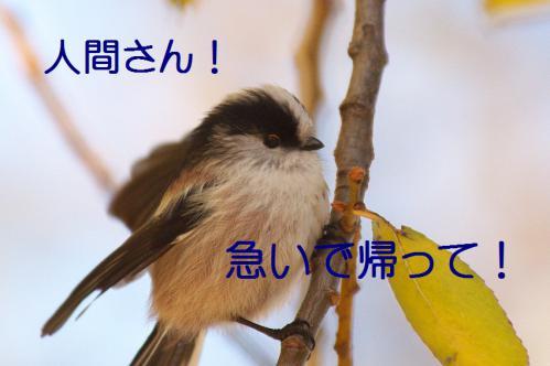 040_20121206193322.jpg