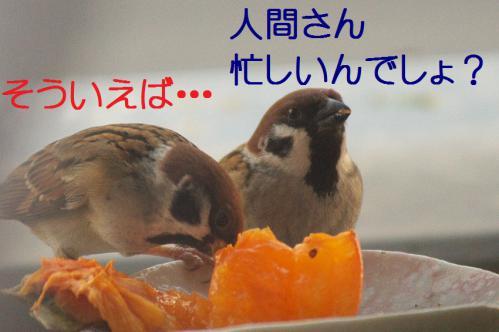 040_20121212214424.jpg