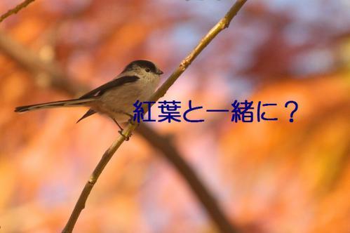040_20121213213940.jpg