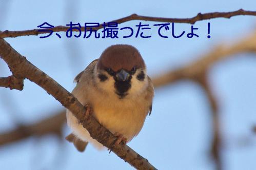 040_20121214214654.jpg