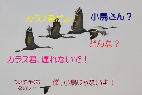 040_20121216202646.jpg