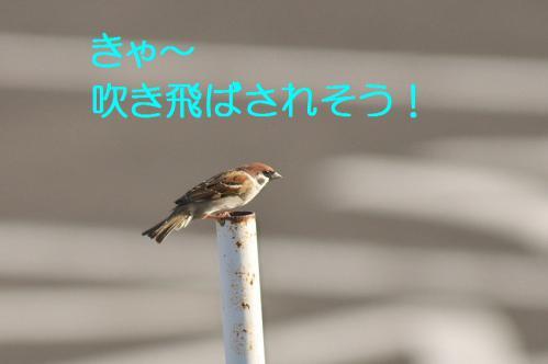 040_20121217024303.jpg