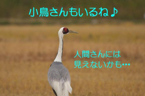 040_20121220193340.jpg