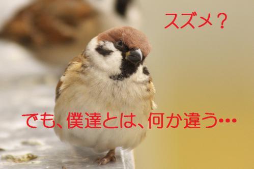 040_20121221214630.jpg