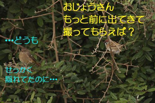 040_20121222193837.jpg