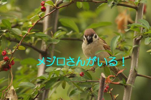 040_20121225223027.jpg