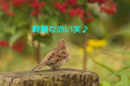 040_20121228215050.jpg