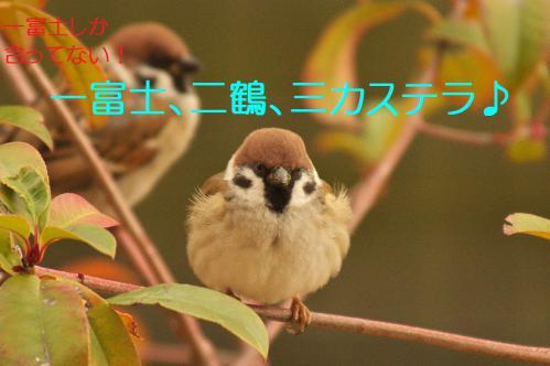 040_20130105210948.jpg
