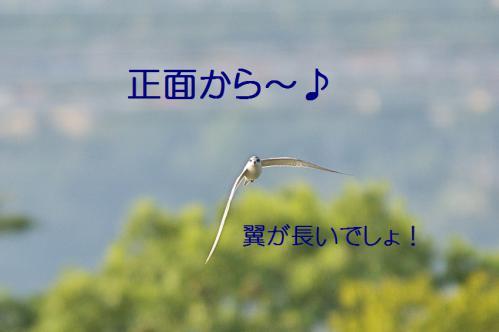 045_20121009191350.jpg