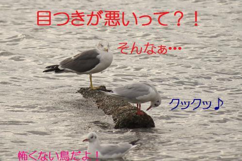 045_20121124215302.jpg