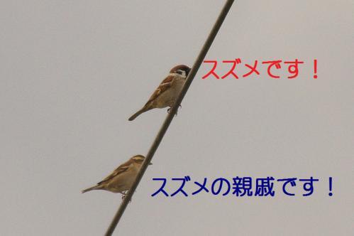 045_20121221214930.jpg