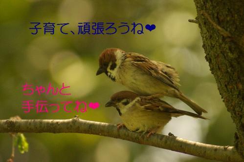 050_20120430195424.jpg