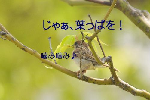 050_20120531224806.jpg