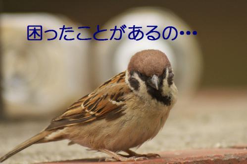 050_20120630222337.jpg
