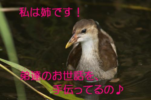 050_20120821210914.jpg
