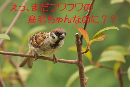 050_20120822221731.jpg