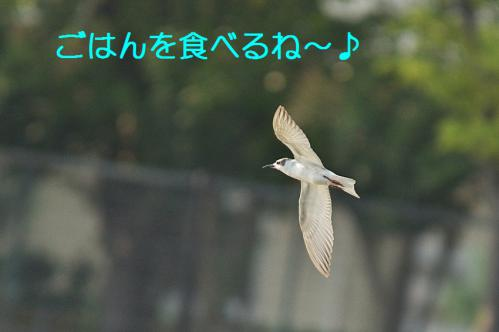 050_20121009191349.jpg