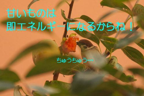 050_20121030223059.jpg