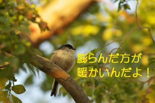 050_20121031214755.jpg