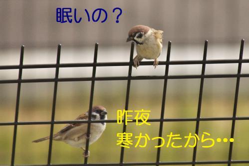 050_20121103224649.jpg