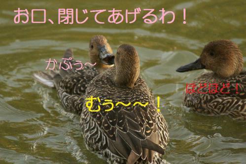 050_20121112215140.jpg