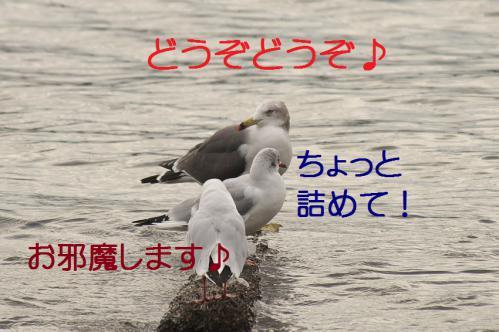 050_20121124215349.jpg