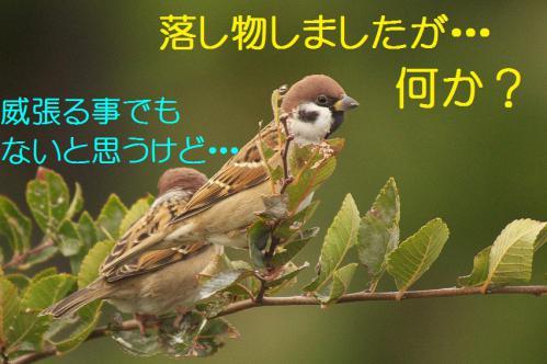 050_20121126223002.jpg