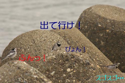 050_20121205220920.jpg